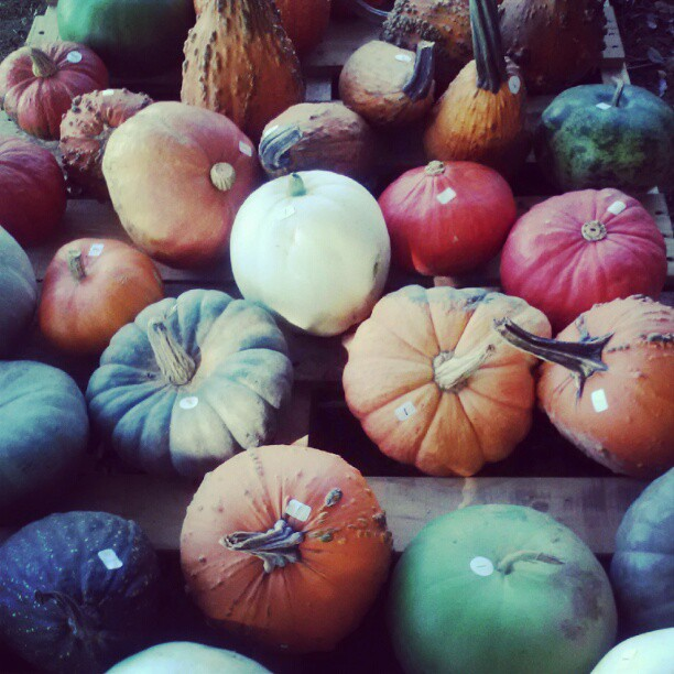 picturesque pumpkins
