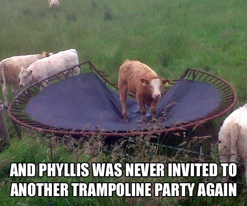 cow trampoline lol Shades of Gray (Hair)
