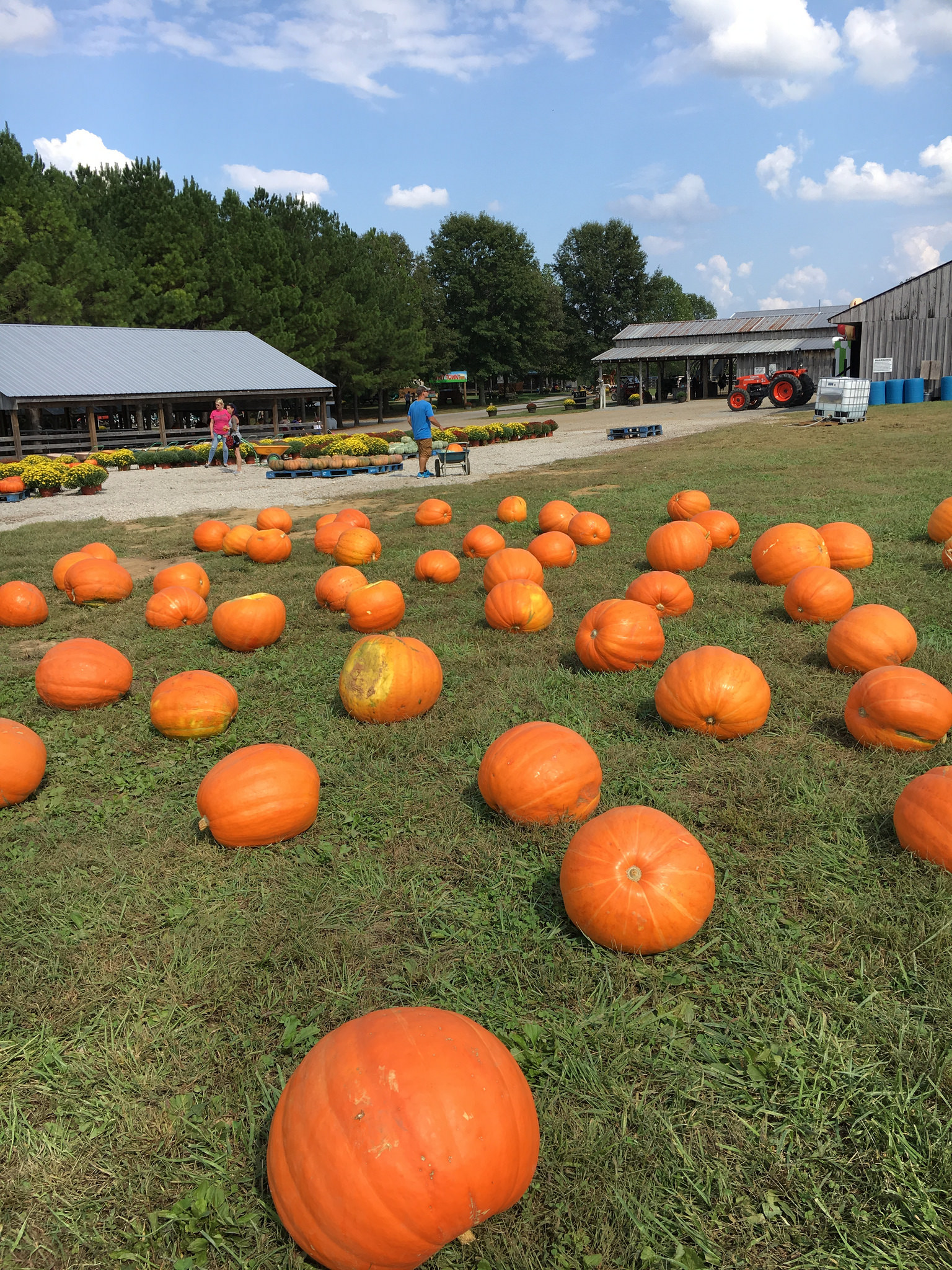 Nashville area pumpkin patch